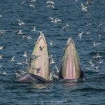 วาฬบรูด้า ทะเลบางขุนเทียน กรุงเทพฯ