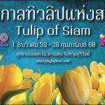 """เทศกาล """"ทิวลิปแห่งสยาม"""" @อุทยานไม้ดอก เพ ลา เพลิน จ.บุรีรัมย์"""