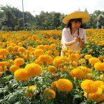 เทศกาลชมสวน (Flora Festival)